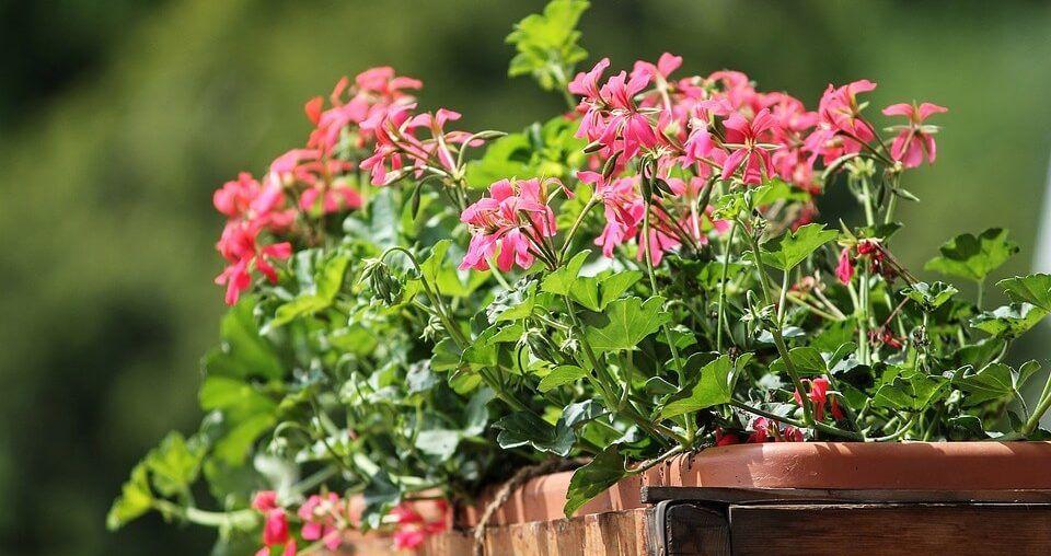 Annaffiare le piante quando vai in vacanza? 3 semplici consigli