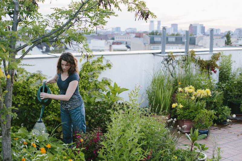 urban gardening: woman pours plants on roof garden, skyline in background