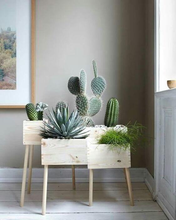 Arredare con le piante: angolo vintage con cactus