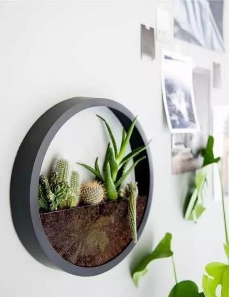 Arredare con le piante: oblò verde