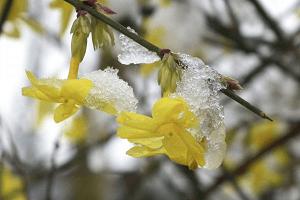 gelsomino - pianta coltivazione autunnale