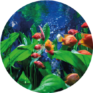 IL GIARDINO DI VETRO: l'acquario come giardino
