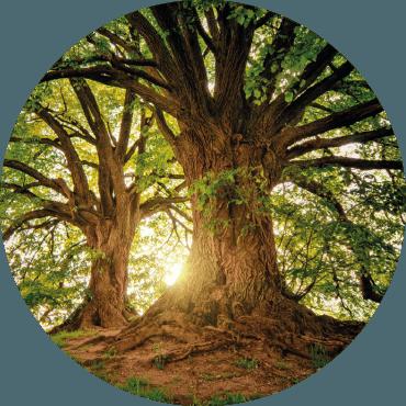 Gli alberi monumentali: tutela e conservazione