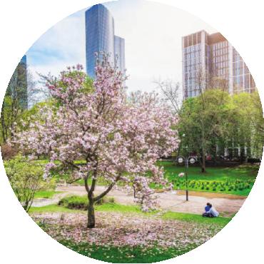 La gestione dell'albero ornamentale in città