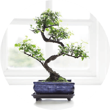 Bonsai: rinvaso e potatura