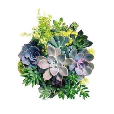 Come realizzare allestimenti all'interno e all'esterno con le piante grasse: cura, esigenze e manutenzione