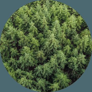 Le certificazioni in arboricoltura