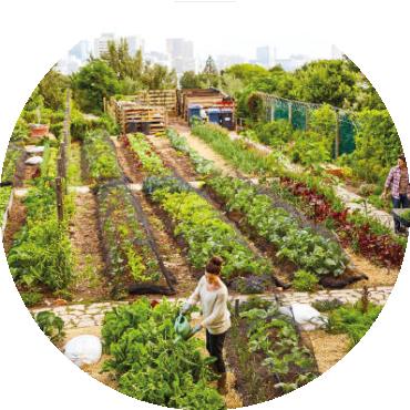 L'approccio agroecologico all'agricoltura urbana attraverso i casi studio dei microjardins di Dakar, Betlemme, il Cairo e Milano