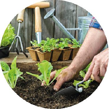 Orticoltura: come preparare al meglio l'orto