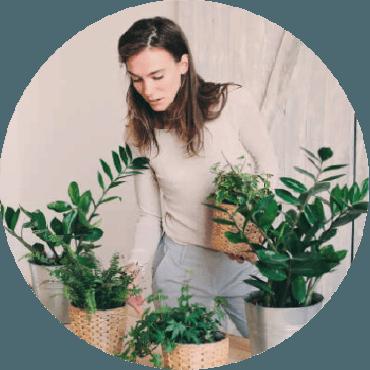 La cura delle piante da interno: malattie, luce, substrati, concimazioni, irrigazioni