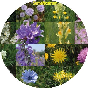 Prati fioriti e specie selvatiche elementi di un nuovo approccio ecologico