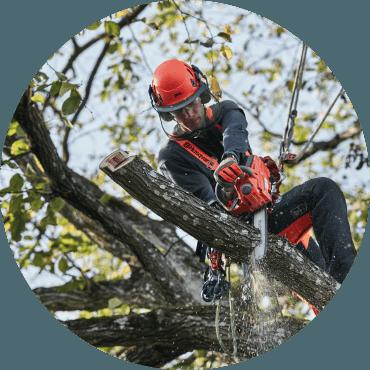 Dimostrazione di TreeClimbing