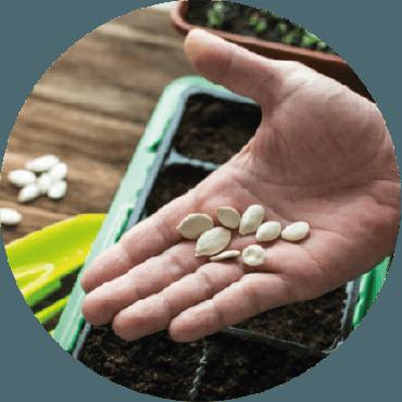 Scelta varietale e autoproduzione delle sementi per l'orto
