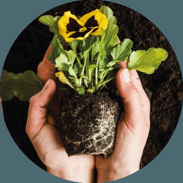 La riproduzione delle piante ornamentali