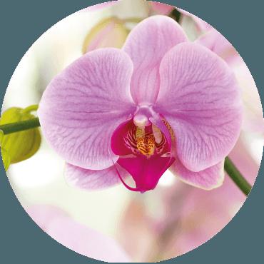 Conosciamo le orchidee!