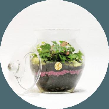 Terrarium: Crea il tuo paesaggio TROPICALE in vaso