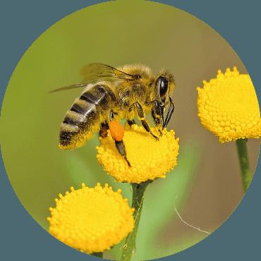 Botanica per impollinatori
