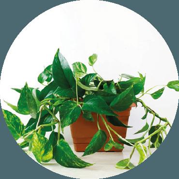 Buone pratiche per la cura delle piante in casa: errori da evitare e consigli utili per mantenerle al meglio