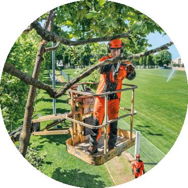 Il sistema albero. Buone pratiche per la cura degli alberi