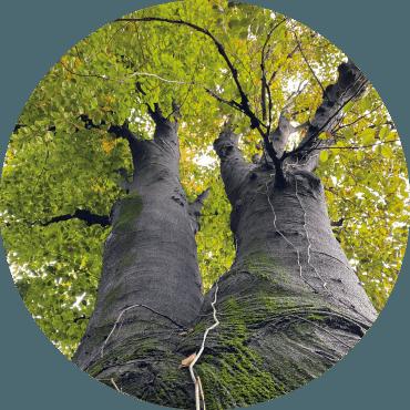 Linee Guida per la gestione degli alberi monumentali