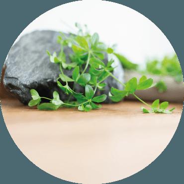 Dalle erbe di terra alle erbe di mare: le erbe spontanee in cucina