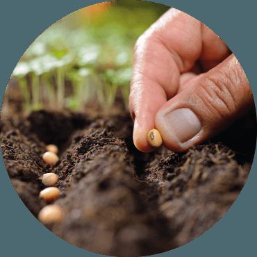 Autoproduzione delle sementi: consigli pratici per garantire purezza e qualità