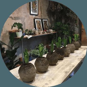 Vasi in terra cruda