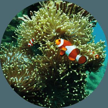 IL GIARDINO DI VETRO: l'acquario come giardino. Quali le piante da utilizzare, come e dove