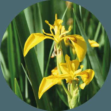 Cambiamenti climatici: le piante perenni e autoctone
