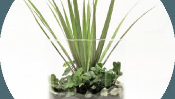 Terrarium: Crea il tuo paesaggio ARIDO in vaso